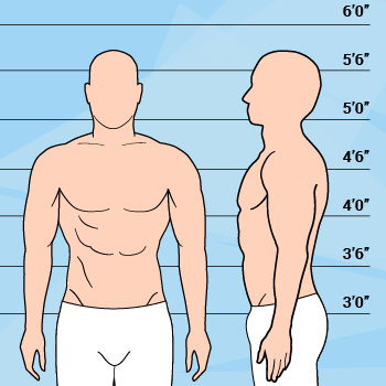 Graphic Of Athletic Body Type