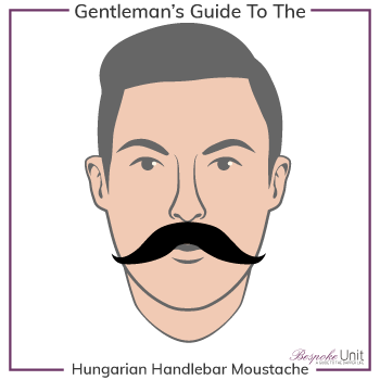 Graphic of Hungarian Handlebar Family Moustache Type