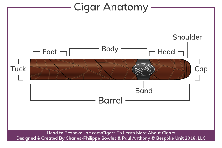 Cigar Anatomy Parts Diagram