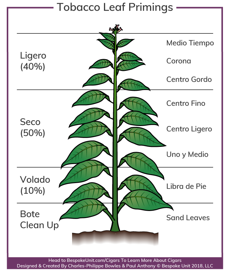 Tobacco Leaf Primings For making Cigars