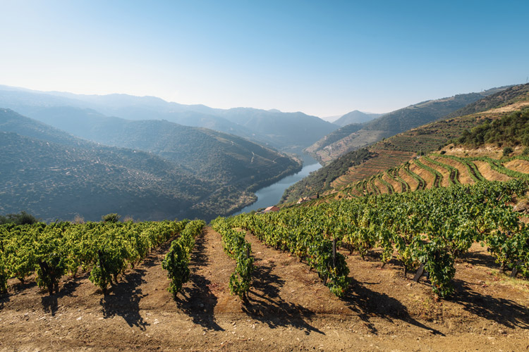 Douro Valley Port Wine Vineyards
